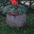 altra-bozza-con-fiori-a-pietramata-orvieto.jpg