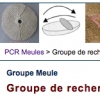 groupe-meules.png