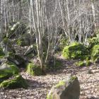 pb-5-scaglioni-di-pietra-lavica-presso-il-laghetto.jpg